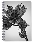 Winter Dormant Rose Of Sharon - Bw Spiral Notebook