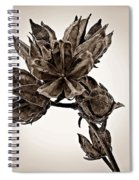 Winter Dormant Rose Of Sharon - S Spiral Notebook
