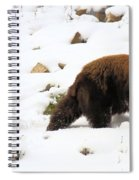 Winter Guide Spiral Notebook