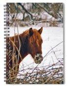 Winter Horse Landscape Spiral Notebook