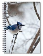 Winter Jay Spiral Notebook