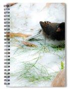 Winter Junco Spiral Notebook