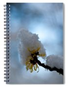 Winter Light Spiral Notebook
