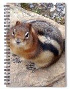 Winter Weight Spiral Notebook