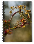 Winter Wild Rose Heart Spiral Notebook