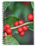 Winterberry Spiral Notebook