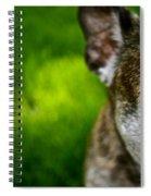 Wise Eye Spiral Notebook