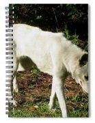 Wolf 2 Spiral Notebook