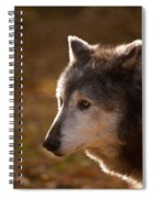 Wolf Outlined By The Sun Spiral Notebook
