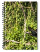 Wood Duck In Flight Spiral Notebook