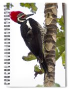 Woodpecker 1 Spiral Notebook