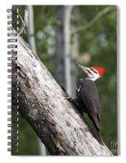 Woodpecker Sizes Me Up Spiral Notebook