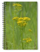 Woolly Ragwort Spiral Notebook