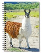 Wyoming Llama - El Tuffo Spiral Notebook