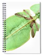 X-ray Of A Giant Leaf Insect Spiral Notebook