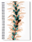 X-ray Of An Acanthus Flower Spiral Notebook