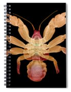 X-ray Of Coconut Crab Spiral Notebook