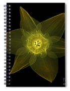 X-ray Of Daffodil Flower Spiral Notebook