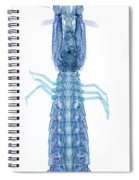 X-ray Of Mantis Shrimp Spiral Notebook