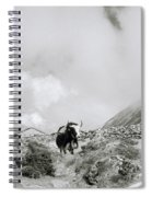 Yak In The Himalaya Spiral Notebook