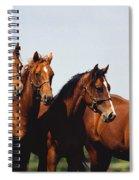Yearling Thoroughbred Spiral Notebook