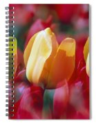 Yellow And Red Tulip Blooms Spiral Notebook