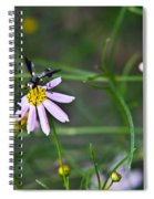 Yellow Banded Black Winged Fly 1 Spiral Notebook