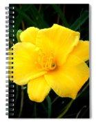 Yellow Beauty  Spiral Notebook