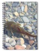 Yellow Bullhead Spiral Notebook