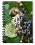 Yellow Cabbage Moth Spiral Notebook