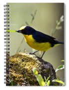 Yellow-crowned Euphonia Spiral Notebook