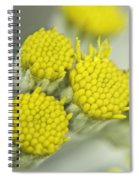 Yellow Cup Buds 1 Spiral Notebook