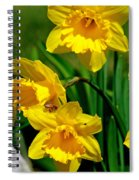 Yellow Daffodils And Honeybee Spiral Notebook
