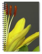 Yellow Day Lily Spiral Notebook
