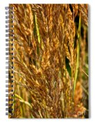 Yellow Feather Reed Grass Spiral Notebook