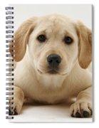 Yellow Lab Puppy Spiral Notebook