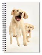 Yellow Labrador Pups Leaping And Running Spiral Notebook