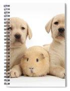 Yellow Labrador Retriever Pups Spiral Notebook