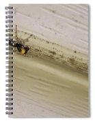 Yellow Palp Spider 1 Spiral Notebook