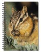 Yellow Pine Chipmunk, Kananaskis Spiral Notebook