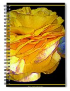 Yellow Ranunculus Flower With Blue Colored Edges Effect Spiral Notebook