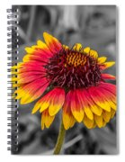 Yellow Ring Spiral Notebook