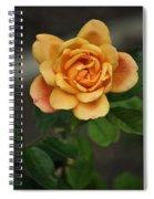 Yellow Rose Of Baden Spiral Notebook