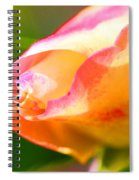 Yellow Rose Tipped In Pink Spiral Notebook
