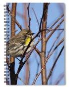 Yellow-rumped Warbler - Placid Spiral Notebook