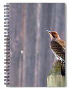 Yellow-shafted Flicker Posing Spiral Notebook