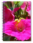 Yellow Spider In The Sun Spiral Notebook
