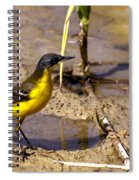Yellow Wagtail Spiral Notebook