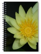 Yellow Waterlily - Nymphaea Mexicana - Hawaii Spiral Notebook