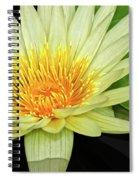 Yellow Waterlily Spiral Notebook
